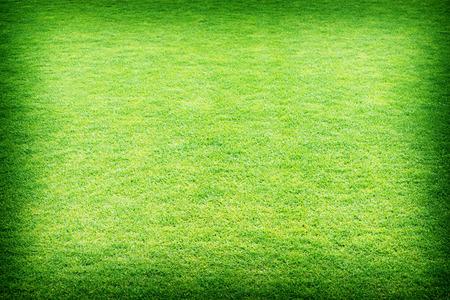 fresh spring green grass, green grass texture or background. Foto de archivo