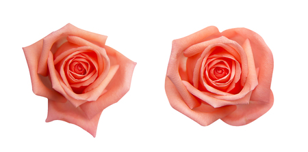 Collection of  orange rose isolated on black background, soft focus and clipping path Reklamní fotografie