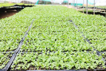 Sapling organic vegetable in farm Imagens