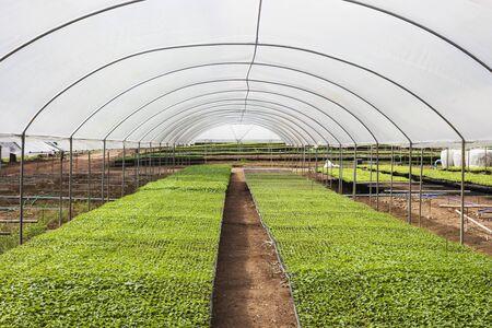 Sapling organic vegetable in farm 写真素材