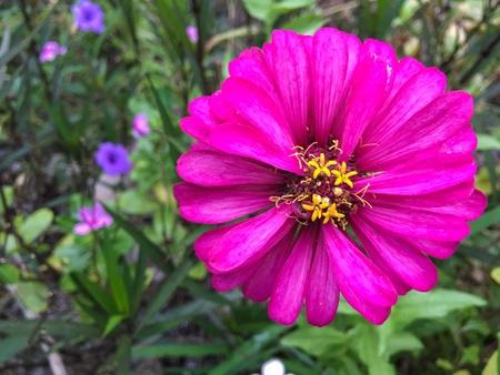 Flower in the garden 写真素材