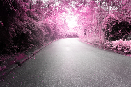 both sides: Asphalt road with trees on both sides in beautiful shades of pink.