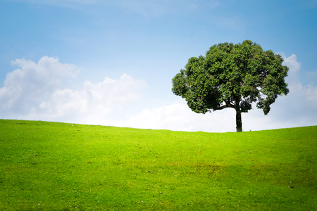Big tree on green meadow landscape with blue sky with copy space Stock Photo