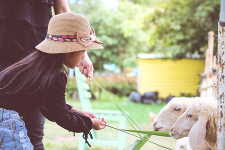 Asian child girl are standing Feeding sheep on the farm