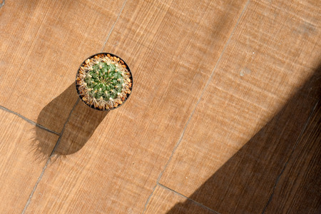 Small cactus in a pot on the wooden floor,Ornamental plants is popular in the area is limited. Reklamní fotografie