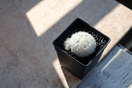 Small cactus in a pot on the wooden floor, Light and shadow concept Reklamní fotografie - 103383725