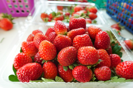 Fresh strawberries are arranged in plastic packaging for distribution