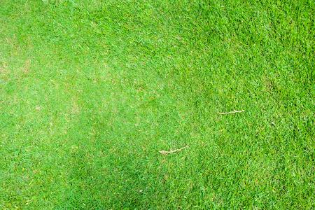 Fresh green grass texture or background, golf courses Reklamní fotografie