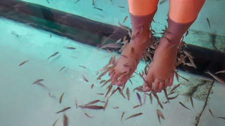 Girl feet are immersed in clear water to make garra rufa fish or Dr. Fish remove peeled and broken skin for healing and relaxation.
