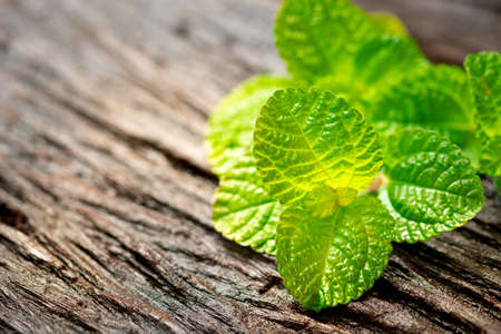 Green mint leaves on an old wooden floor Archivio Fotografico