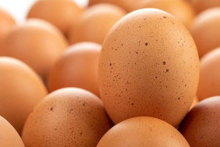 Fresh chicken eggs are placed in the panel