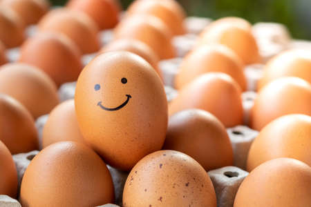 The chicken eggs in the panel smiled in a good mood, the concept is happy to eat. Archivio Fotografico
