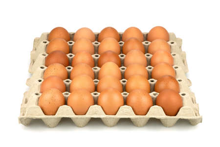 Eggs are freshly placed in a panel isolated on a white background