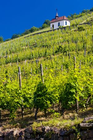 crus: grand cru vineyard and Chapel of St. Urban, Thann, Alsace, France Stock Photo