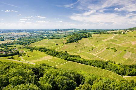 growers: vineyards near Chateau Chalon, D�partement Jura, Franche-Comt�, France Stock Photo