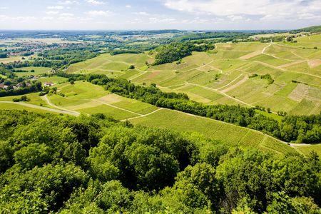 jura: vineyards near Chateau Chalon, D�partement Jura, Franche-Comt�, France Stock Photo