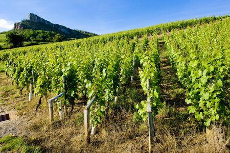 growers: La Roche de Solutr� with vineyards, Burgundy, France