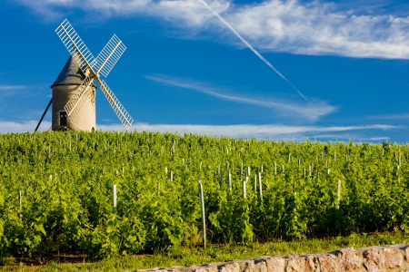 vineyards with windmill near Ch�nas, Beaujolais, Burgundy, France