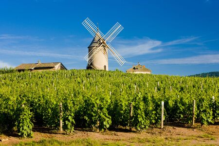 vineyards with windmill near Chénas, Beaujolais, Burgundy, France Stock Photo
