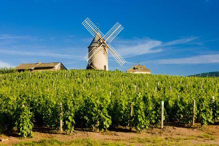 mill valley: vineyards with windmill near Chénas, Beaujolais, Burgundy, France Stock Photo