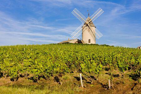 ブドウ園、フランス ブルゴーニュ ボジョレー Ch nas 近くの風車