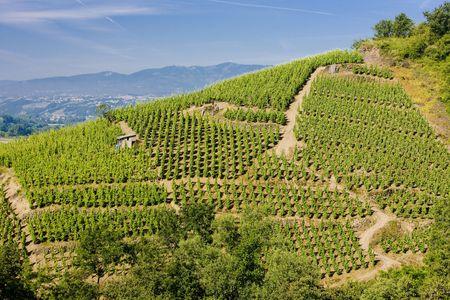 crus: grand cru vineyard, Côte Rotie, Rhône-Alpes, France Stock Photo