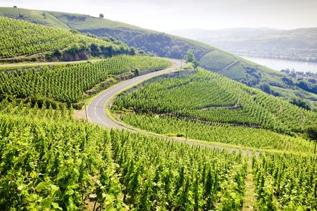 grand cru vineyard, Côte Rotie, Rhône-Alpes, France Stock Photo - 5064187