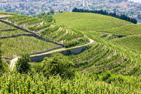 crus: grand cru vineyard, L�Hermitage, Rh�ne-Alpes, France Stock Photo