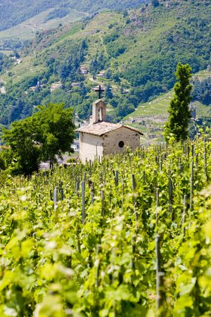 crus: grand cru vineyard and Chapel of St. Christopher, L�Hermitage, Rh�ne-Alpes, France