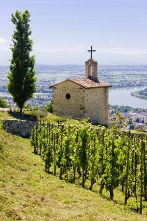 viniculture: grand cru vineyard and Chapel of St. Christopher, L´Hermitage, Rhône-Alpes, France