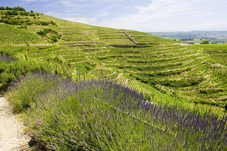 crus: grand cru vineyard, L�Hermitage, Rh�ne-Alpes, France Stock Photo