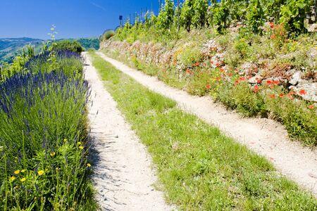 crus: grand cru vineyard, L´Hermitage, Rhône-Alpes, France