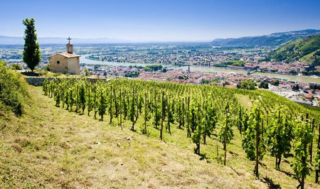 rhone: grand cru vineyard and Chapel of St. Christopher, L�Hermitage, Rh�ne-Alpes, France