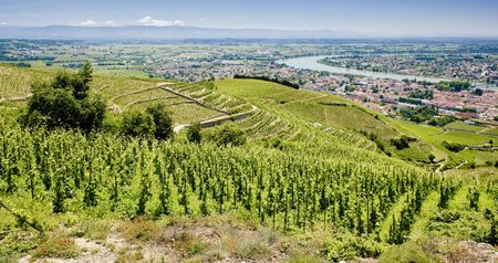 crus: grand cru vineyard, Tain-L�Hermitage, Rh�ne-Alpes, France Stock Photo