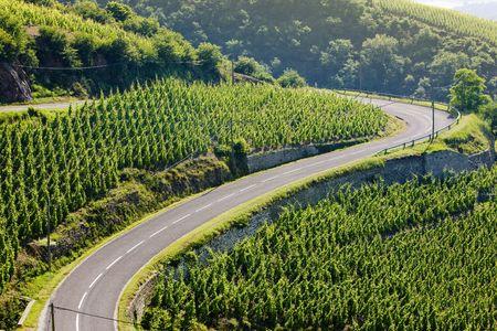 growers: grand cru vineyard, C�te Rotie, Rh�ne-Alpes, France Stock Photo