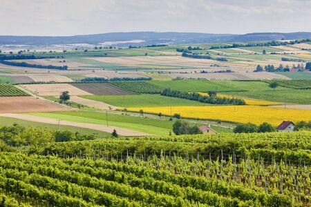 znojemsko: vineyards, Southern Moravia, Czech Republic Stock Photo