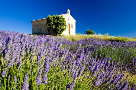 chapel with lavender field, Plateau de Valensole, Provence, France Stock Photo