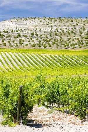 castile leon: vineyards near Villabanez, Valladolid Province, Castile and Leon, Spain