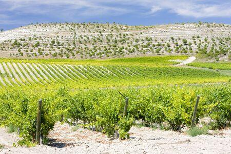growers: vineyards near Villabanez, Valladolid Province, Castile and Leon, Spain
