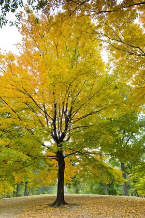 autumnal Central Park, New York City, USA Stock Photo - 5634939
