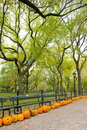 falltime: autumnal Central Park, New York City, USA
