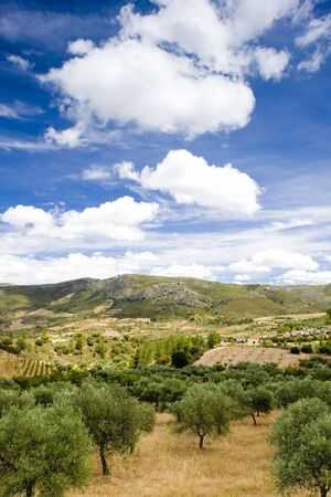 douro: olive trees, Douro Valley, Portugal