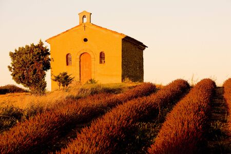 natural world: chapel with lavender field, Plateau de Valensole, Provence, France Stock Photo