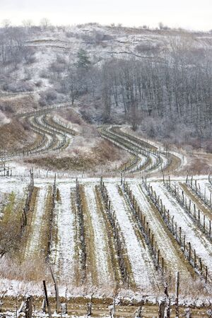 znojemsko: winter vineyards, Eko Hnizdo, Czech Republic