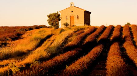 plateau: chapel with lavender field, Plateau de Valensole, Provence, France Stock Photo