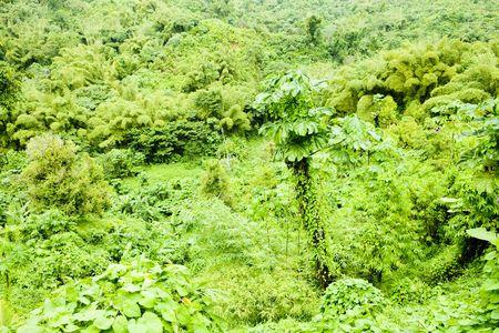 grenada: inland of Grenada, Caribbean Stock Photo
