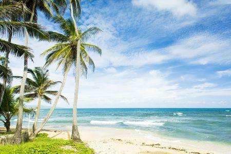 palmtree: Martins Bay, Barbados, Caribbean Stock Photo