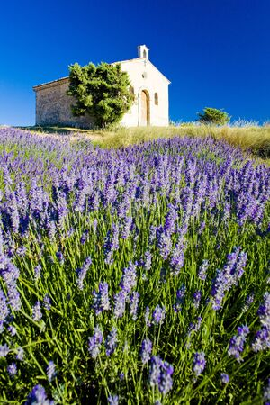 plateau of flowers: chapel with lavender field, Plateau de Valensole, Provence, France Stock Photo