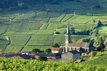 agronomy: Vergisson with vineyards, Burgundy, France
