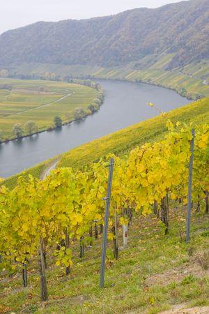 moseltal: Moselle Valley, Piesport, Rheinland Pfalz, Germany